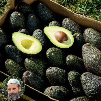 Avocado Farmer Box organic from Rufino 5kg