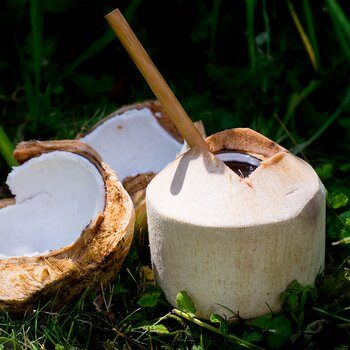 Young Coconut Pagode organic