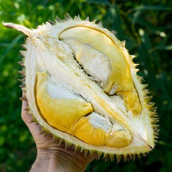 Durian Chanee, whole