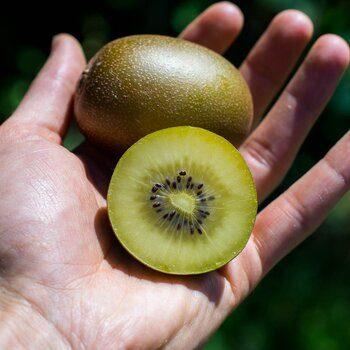 Kiwi Sun Gold bio