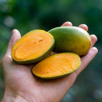 Mango Duseri bio