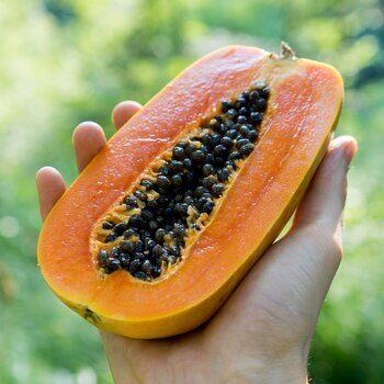 Papaya Nila bio